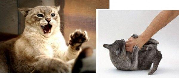 ¿Cómo Evitar la Agresividad en los Gatos?