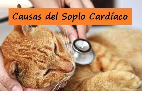 Causas del Soplo Cardíaco en Gatos