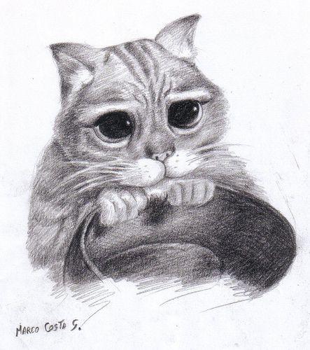 Dibujar Gato A Lápiz Cuidar Gatitos Fotos Razas Gatos
