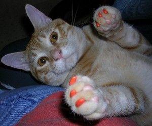 Quitarle las uñas al gato