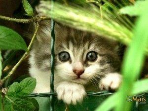 gato 2