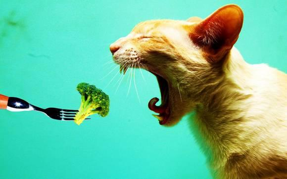 Dieta-Barf-para-gatos