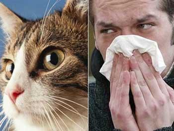 alergia-mascotas