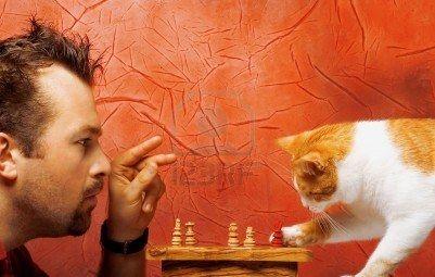 4489778-dos-jugadores-de-ajedrez-el-hombre-y-el-gato