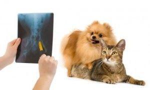 gatos y enfermedades urinarias