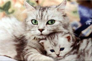 Alimenta bien a tu gato durante la gestación y la lactancia