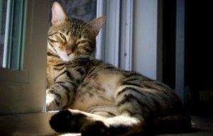 el embarazo en las gatas