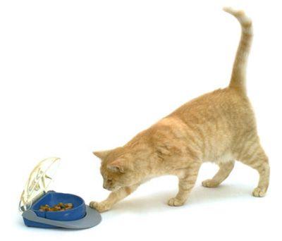 evitar sobre peso en gatos