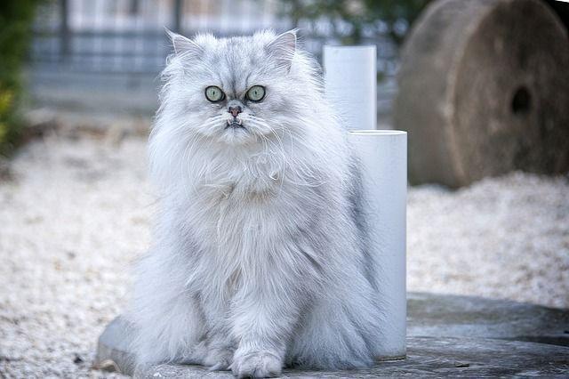 cat-301458_640