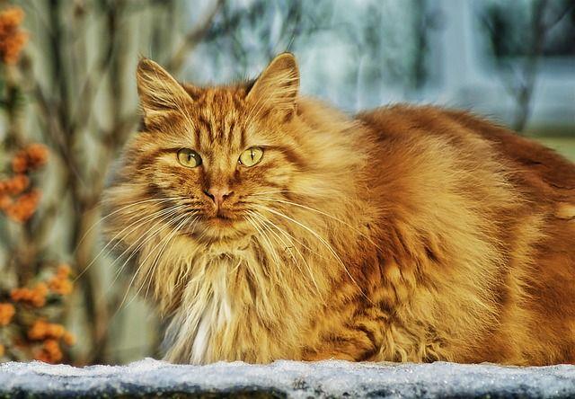 cat-67345_640