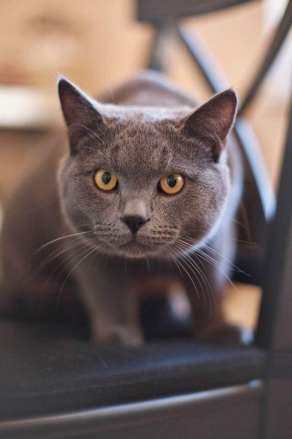 cat-165068_640