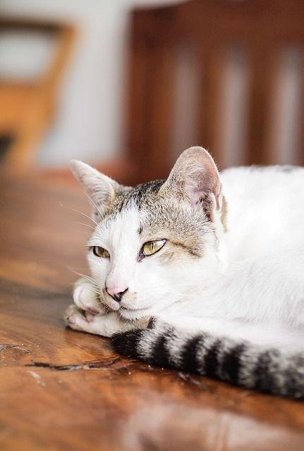 cat-169095_640 - copia
