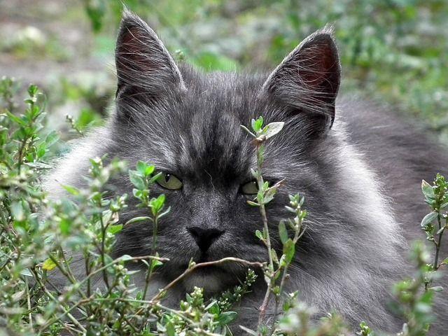 cat-194858_640