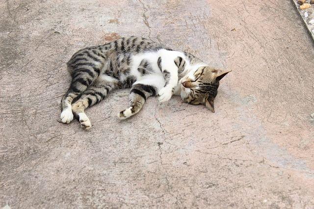 cat-447819_640
