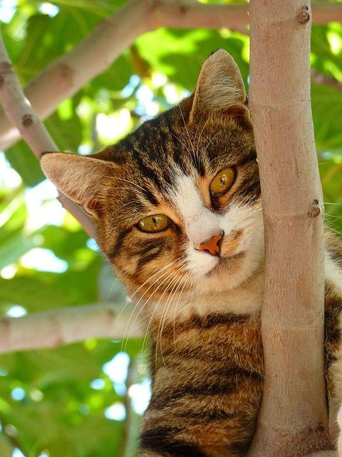 cat-61079_640 - copia
