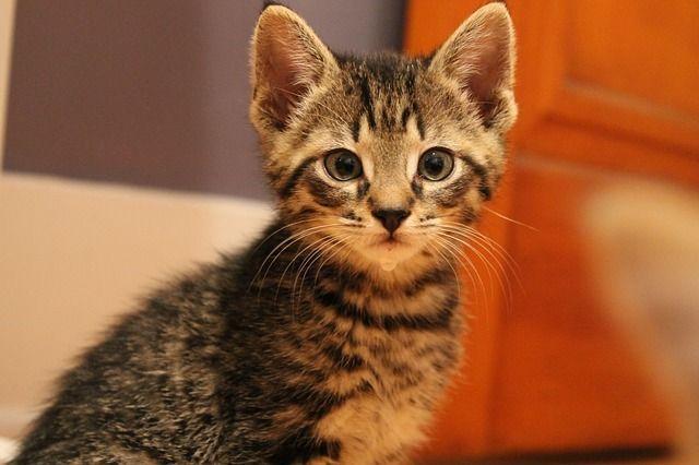 kitten-447804_640
