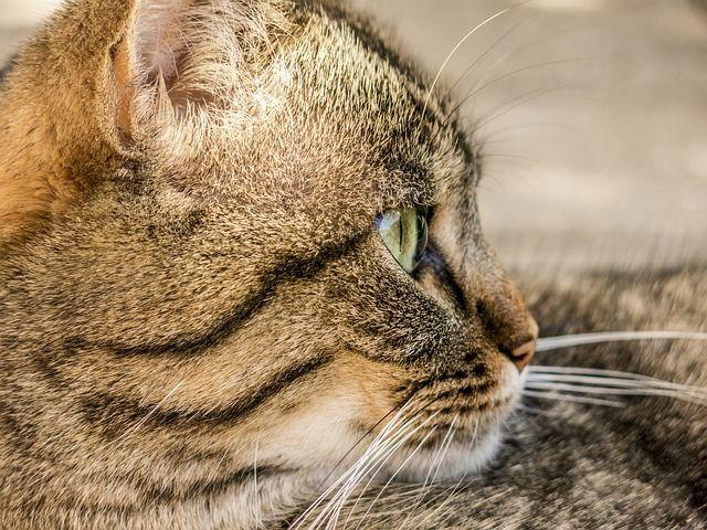 cat-181608_640
