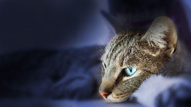 cat-431074_640