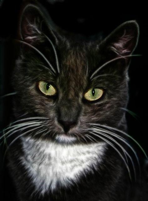 cat-75957_640
