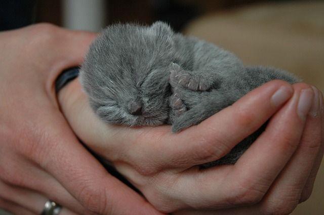 cat-448339_640