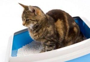 evitar olor en arena de gatos