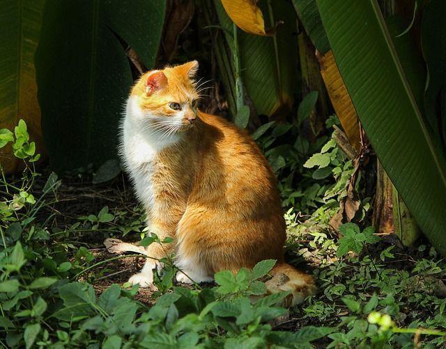 cat-439886_640