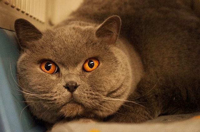 cat-460363_640