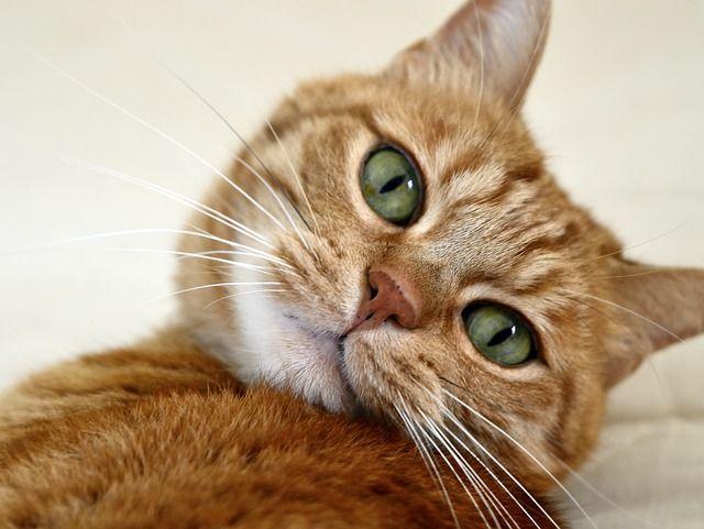 cat-96876_640