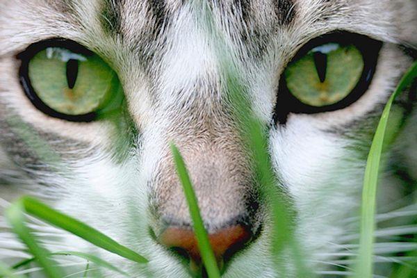 Cuáles Son Los Alimentos Que No Debe Consumir Un Gato