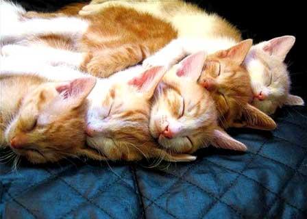 Gatos durmientes II
