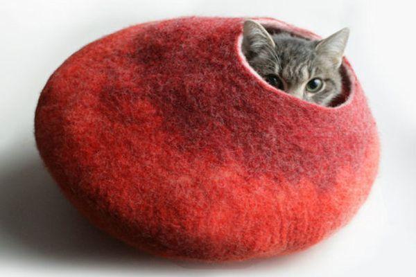 Cuáles Son Los Cuidados Básicos Que Requiere Tu Gato