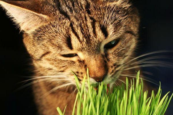 Qué Plantas No Son Toxicas Para Los Gatos