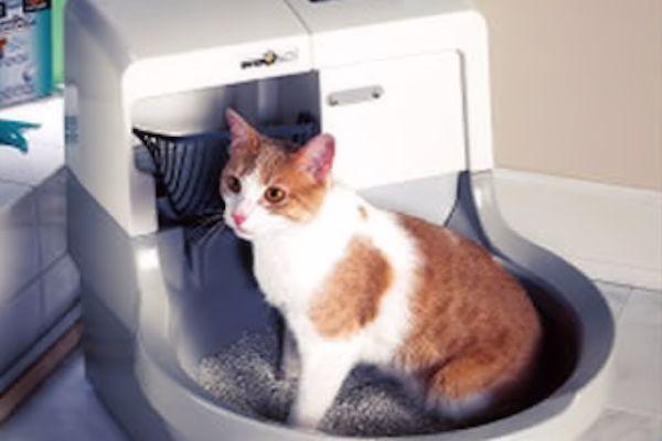 Todo Sobre Las Cajas De Arena Automáticas Para Gatos