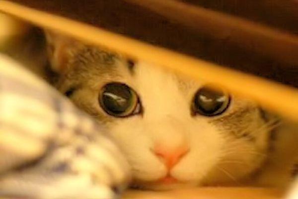 gatos asustadizos