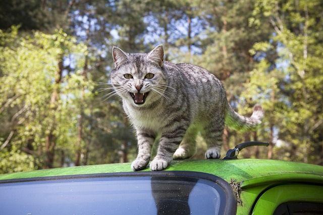 cat-328844_640