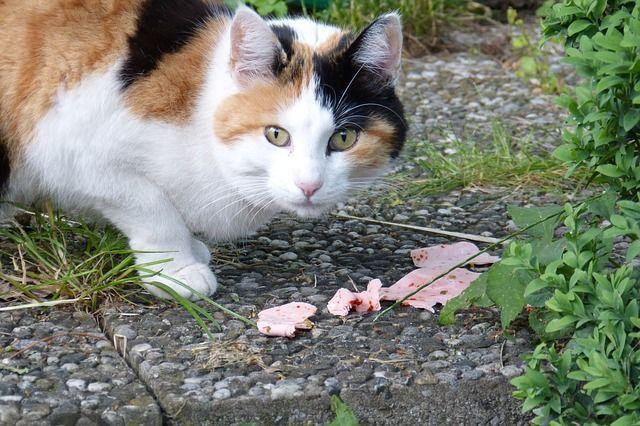 cat-353409_640