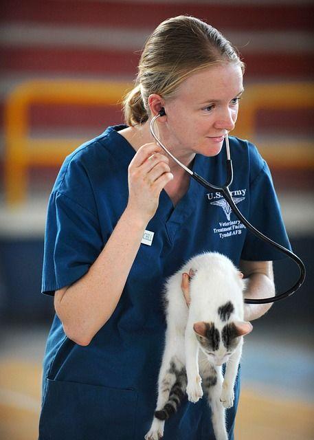 veterinarian-577826_640