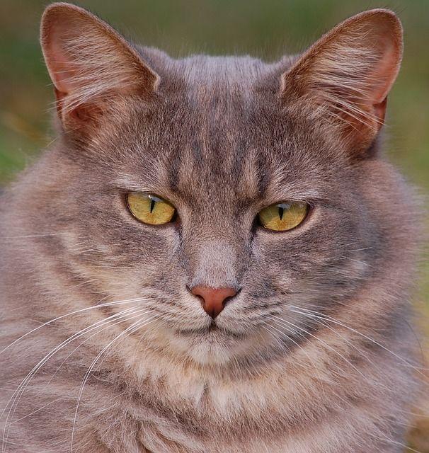 cat-301720_640