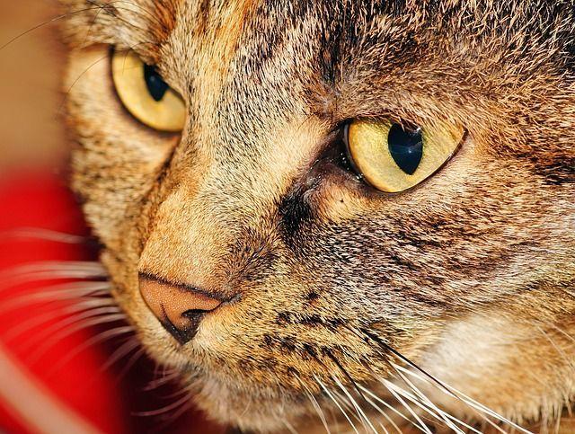 cat-558228_640