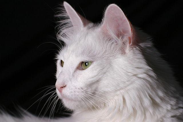 cat-806211_640