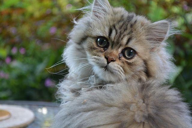 cat-831258_640