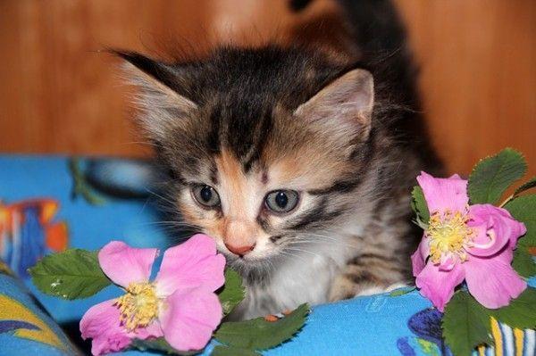 cat-574262_640
