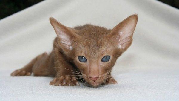 kitten-408798_640 (1)