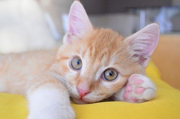 kitten-588148_640