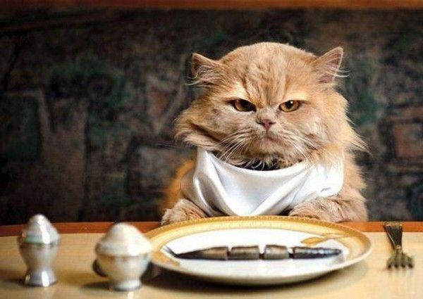 comida-que-no-debe-comer-gato