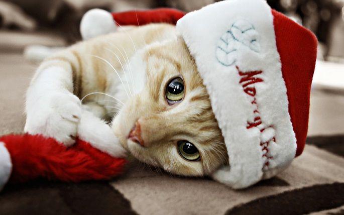 gatos,navidad,2