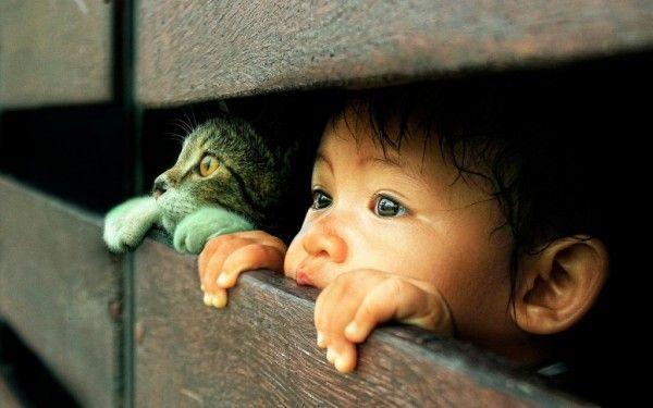 que-les-aportan-los-gatos-a-los-ninos