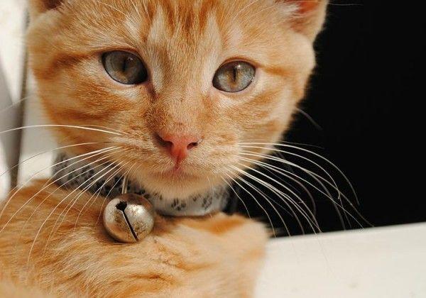 es-malo-cascabel-para-gatos