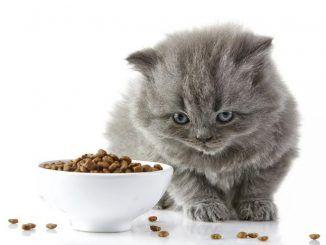 Razones por las que puede ser que mi gato no coma