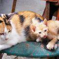 ¿Quién Cuida del Gato en Vacaciones?